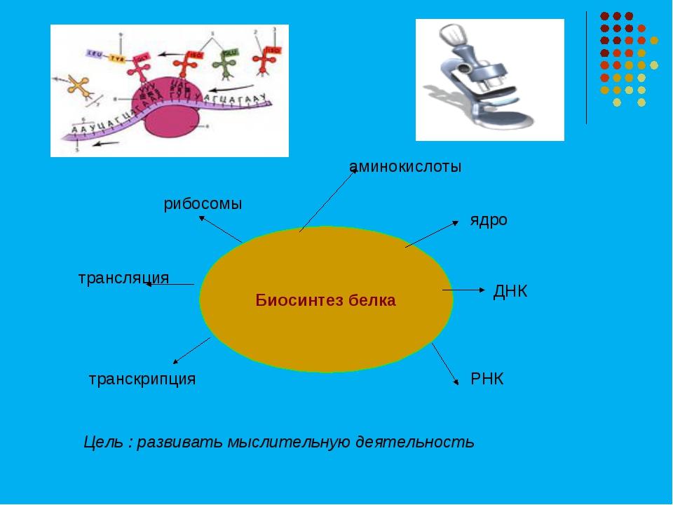 Биосинтез белка трансляция рибосомы ядро ДНК РНК транскрипция Цель : развиват...