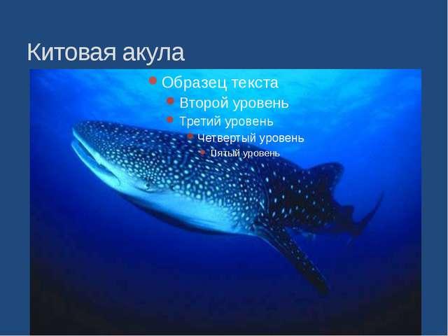 Китовая акула