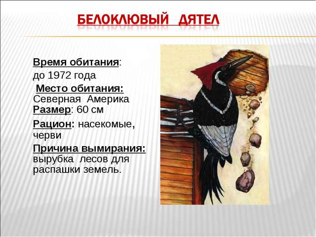Время обитания: до 1972 года Место обитания: Северная Америка Размер: 60 см Р...