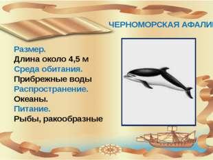 ЧЕРНОМОРСКАЯ АФАЛИНА Размер. Длина около 4,5 м Среда обитания. Прибрежные во