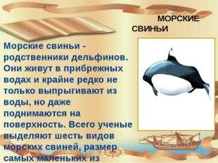 МОРСКИЕ СВИНЬИ Морские свиньи - родственники дельфинов. Они живут в прибрежн
