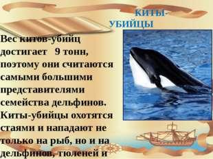 КИТЫ-УБИЙЦЫ Вес китов-убийц достигает 9 тонн, поэтому они считаются самыми б