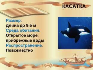 КАСАТКА Размер. Длина до 9,5 м Среда обитания. Открытое море, прибрежные вод