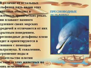 ПРЕСНОВОДНЫЕ ДЕЛЬФИНЫ В отличие от остальных дельфинов пять видов этих живот