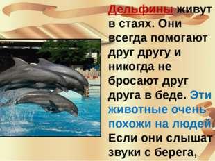 Дельфины живут в стаях. Они всегда помогают друг другу и никогда не бросают