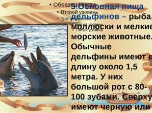 3.Основная пища дельфинов – рыба, моллюски и мелкие морские животные. Обычны