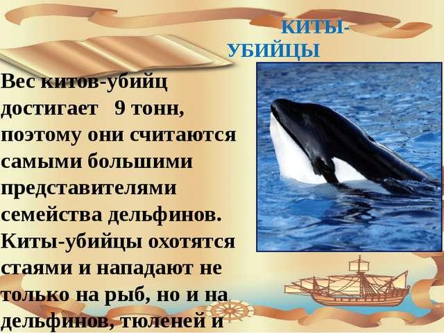 КИТЫ-УБИЙЦЫ Вес китов-убийц достигает 9 тонн, поэтому они считаются самыми б...
