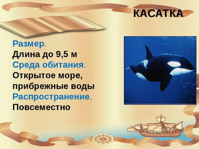 КАСАТКА Размер. Длина до 9,5 м Среда обитания. Открытое море, прибрежные вод...