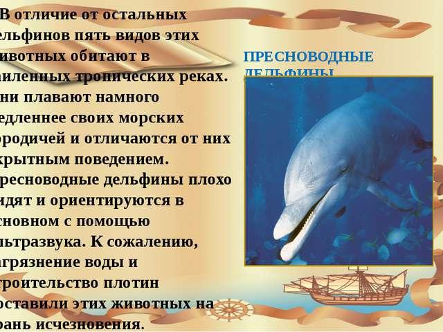 ПРЕСНОВОДНЫЕ ДЕЛЬФИНЫ В отличие от остальных дельфинов пять видов этих живот...