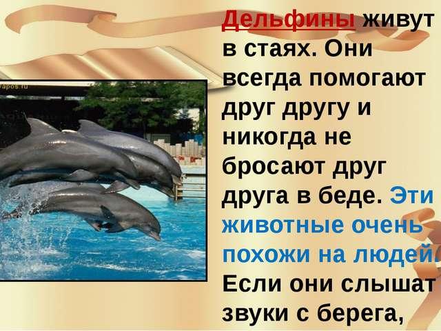Дельфины живут в стаях. Они всегда помогают друг другу и никогда не бросают...