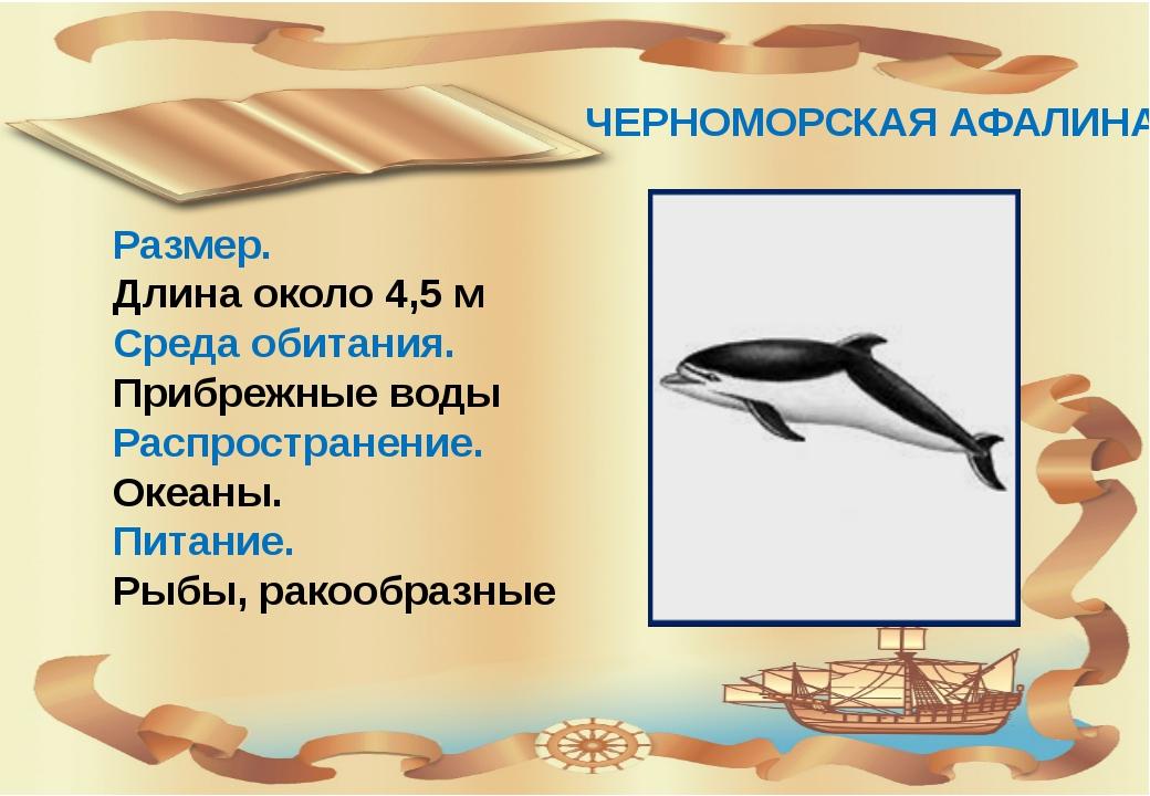 ЧЕРНОМОРСКАЯ АФАЛИНА Размер. Длина около 4,5 м Среда обитания. Прибрежные во...