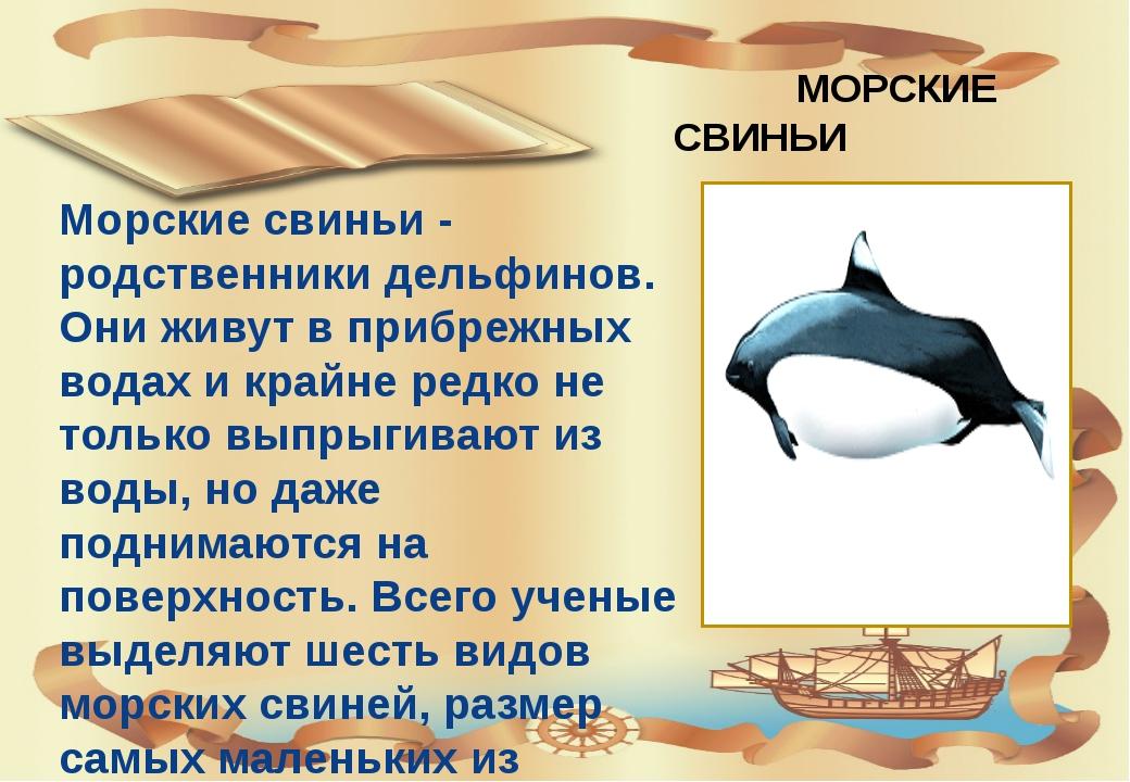 МОРСКИЕ СВИНЬИ Морские свиньи - родственники дельфинов. Они живут в прибрежн...