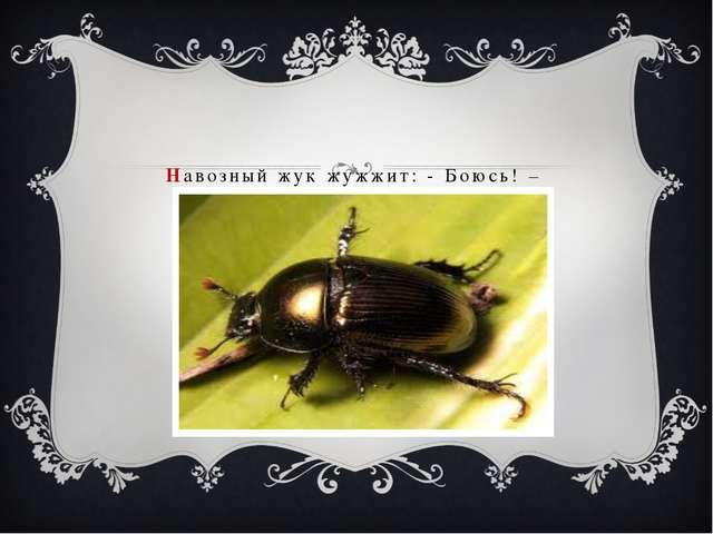 Навозный жук жужжит: - Боюсь! –