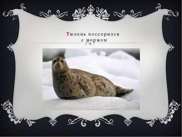 Тюлень поссорился с моржом
