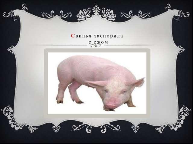 Свинья заспорила с ежом