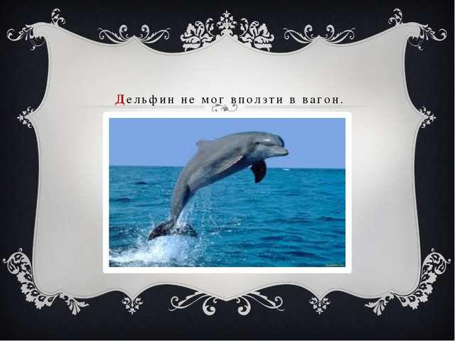 Дельфин не мог вползти в вагон.