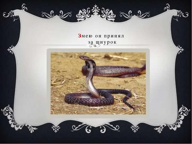 Змею он принял за шнурок