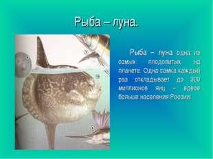 Рыба – луна. Рыба – луна одна из самых плодовитых на планете. Одна самка кажд