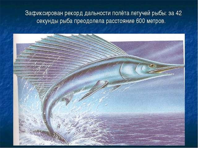 Зафиксирован рекорд дальности полёта летучей рыбы: за 42 секунды рыба преодо...