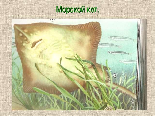 Морской кот.