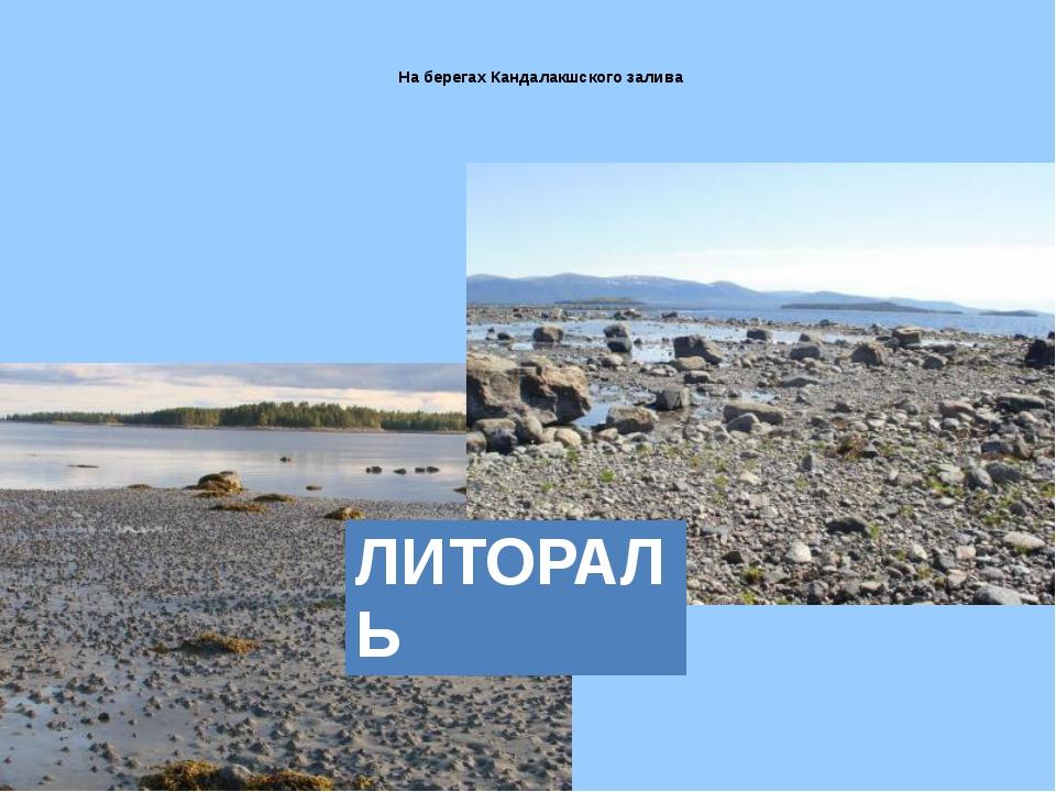 На берегах Кандалакшского залива ЛИТОРАЛЬ