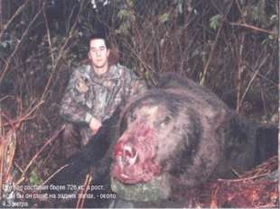 Его вес составил более 726 кг, а рост, если бы он стоял на задних лапах, - ок