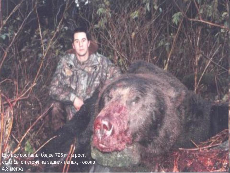 Его вес составил более 726 кг, а рост, если бы он стоял на задних лапах, - ок...