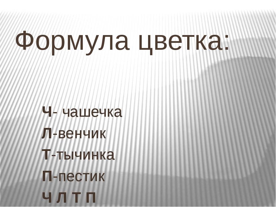 Формула цветка: Ч- чашечка Л-венчик Т-тычинка П-пестик Ч Л Т П