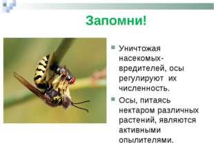 Запомни! . Уничтожая насекомых-вредителей, осы регулируют их численность. Ос