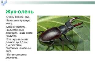 Жук-олень Очень редкий жук. Занесен вКрасную книгу. Можно увидеть налистве