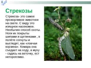 Стрекозы Стрекоза- это самое прожорливое животное на свете. С виду это изящно