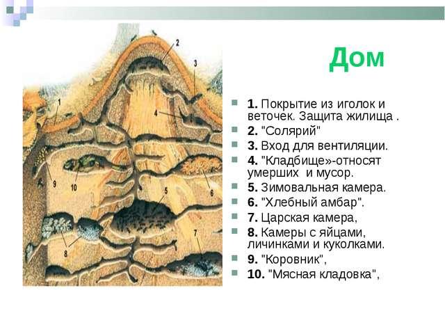 """Дом 1. Покрытие из иголок и веточек. Защита жилища . 2. """"Солярий"""" 3. Вход дл..."""