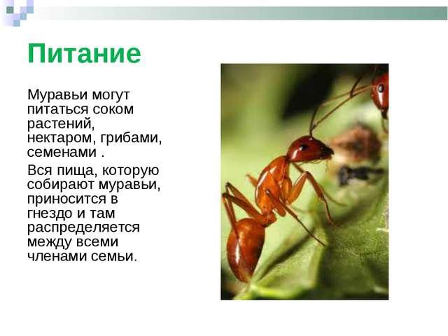 Питание Муравьи могут питаться соком растений, нектаром, грибами, семенами ....