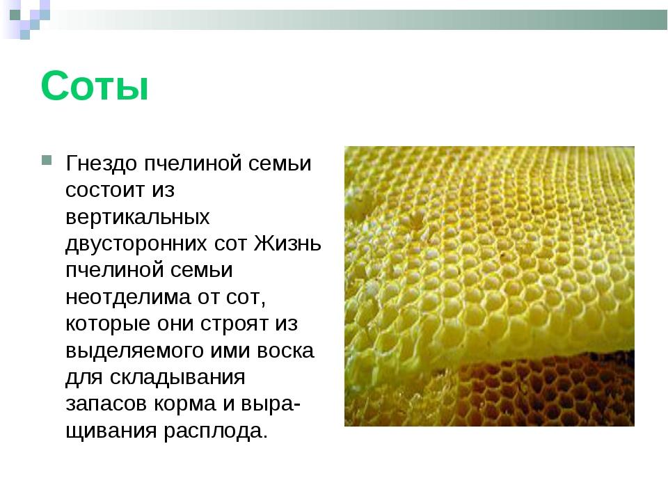 Соты Гнездо пчелиной семьи состоит из вертикальных двусторонних сот Жизнь пче...