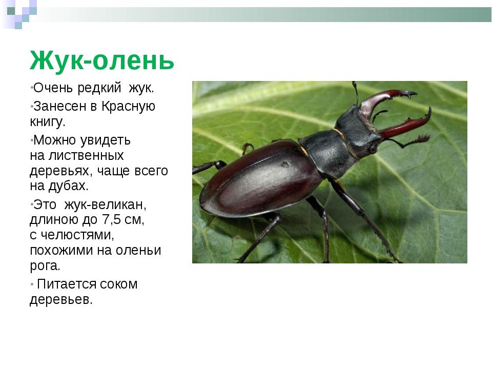 Жук-олень Очень редкий жук. Занесен вКрасную книгу. Можно увидеть налистве...