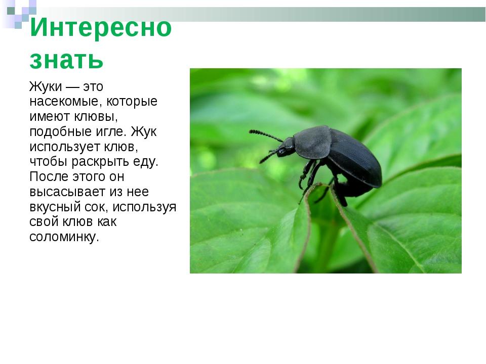 Интересно знать Жуки— это насекомые, которые имеют клювы, подобные игле. Жук...