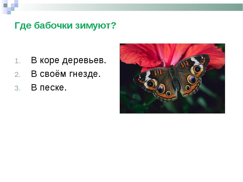 Где бабочки зимуют? В коре деревьев. В своём гнезде. В песке.