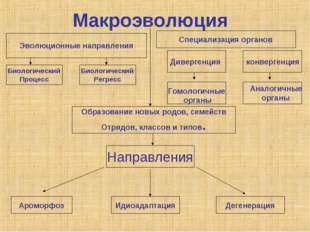 Макроэволюция конвергенция Биологический Процесс Направления Ароморфоз Идиоад