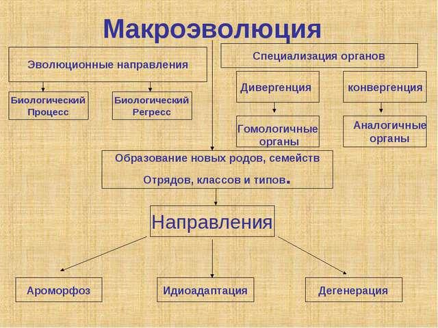 Макроэволюция конвергенция Биологический Процесс Направления Ароморфоз Идиоад...