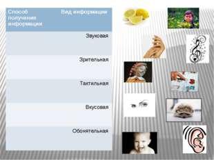 Способ получения информации Вид информации Звуковая Зрительная Тактильная Вку