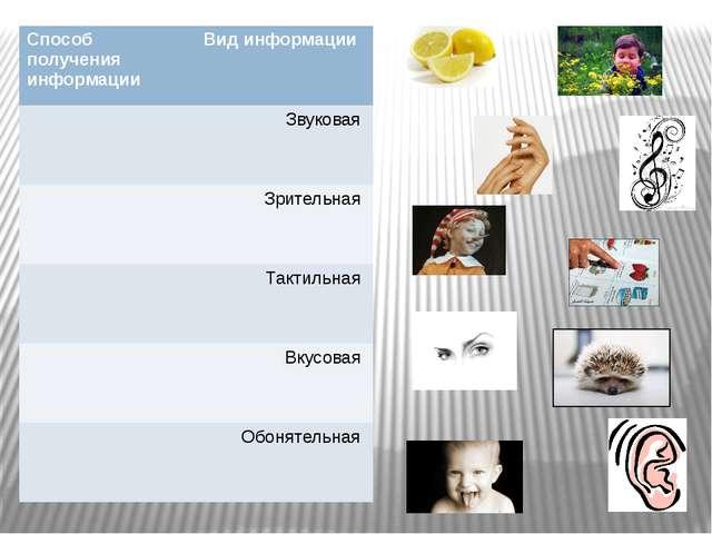 Способ получения информации Вид информации Звуковая Зрительная Тактильная Вку...