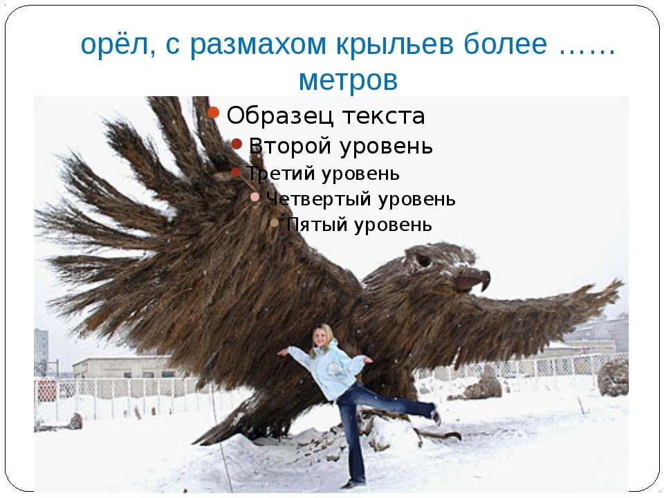 орёл, с размахом крыльев более ……метров