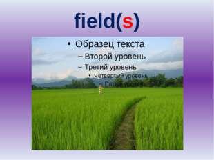 field(s)
