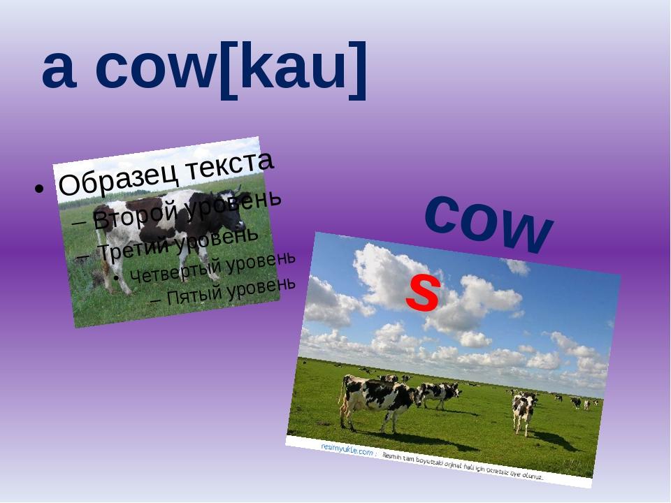 a cow[kau] cows