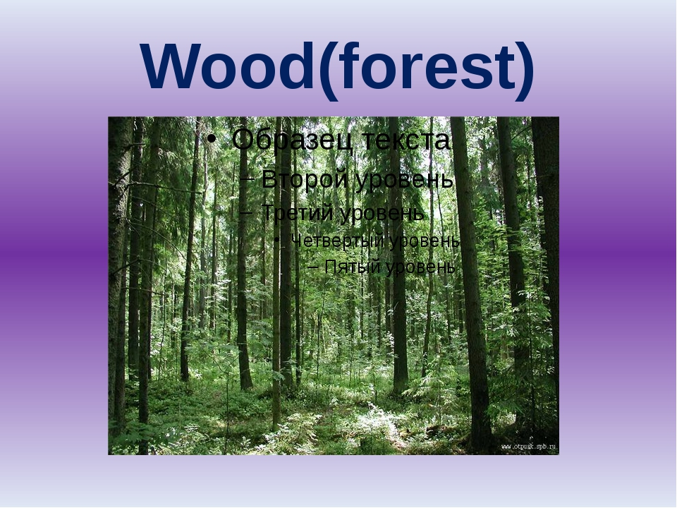 Wood(forest)