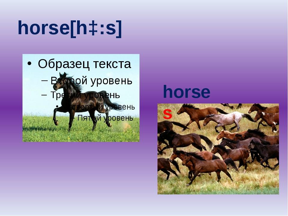 horse[hɔ:s] horses