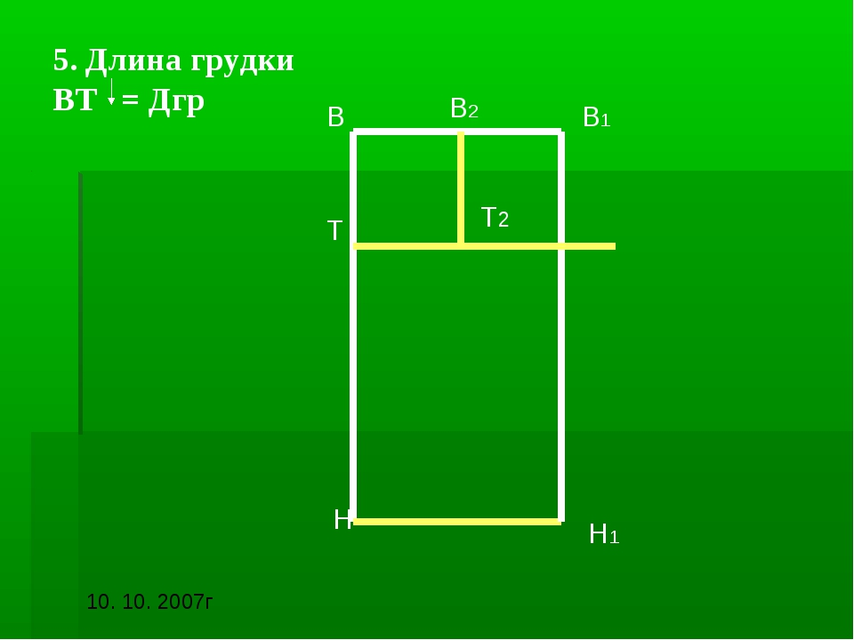 5. Длина грудки ВТ = Дгр В В1 Н Н1 В2 Т Т2