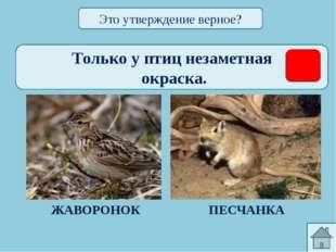 http://zoomet.ru/mal/malchevski_oglav.html синицы (большая, хохлатая, лазорев