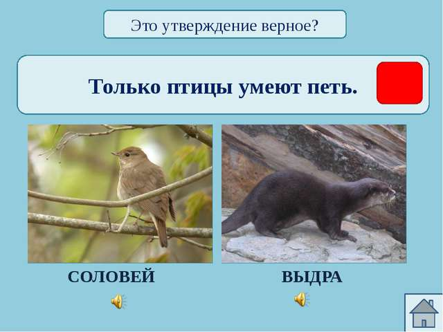 Только у птиц есть клюв. БЕКАС УТКОНОС Это утверждение верное?