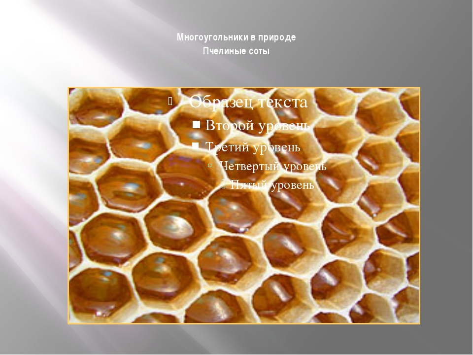Многоугольники в природе Пчелиные соты